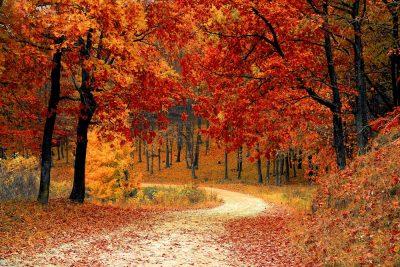 beautiful-autumn-path-through-the-trees