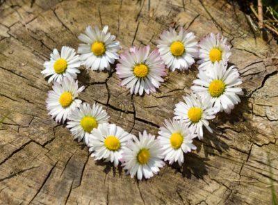 Hippy Daisy Heart