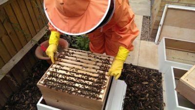 Open Hive - Hippy Beekeeping