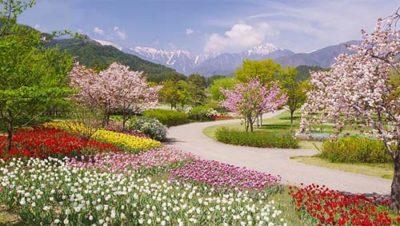 Spring has Sprung - Spring Flowers