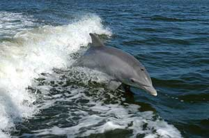 A Hippy Day Out In Aberdeen - Bottlenose-Dolphin