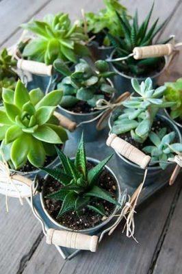 What Do Hippies Do For Fun - Succulents